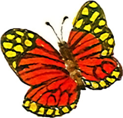 AG-Butterfly